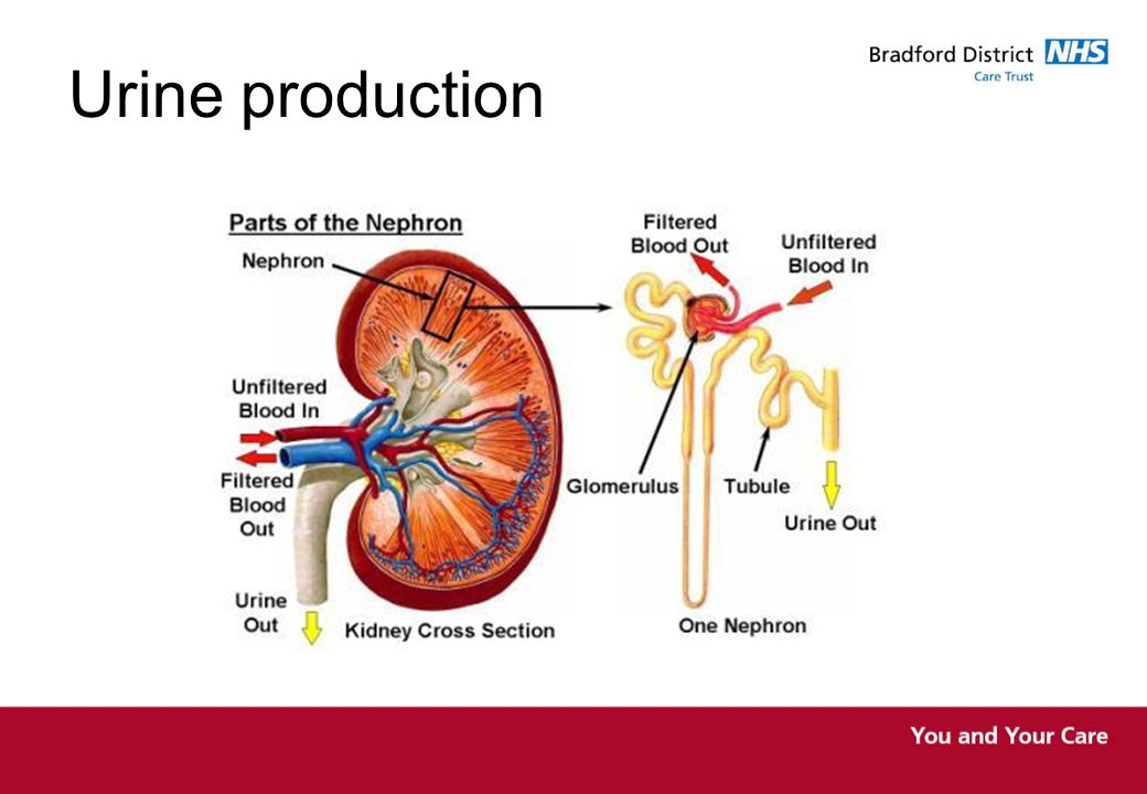 Skills for Health CCO1 Urine production Normal micturition The nervous system including autonomic dysreflexia The bowel and it's links to voiding problems The endocrine system The pelvic floor The prostate gland, the urethra and sphincters Voiding dysfunction Reflexes
