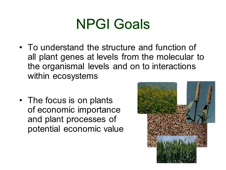 NPGI Goals To understand the structure and function of all plant genes at levels from the molecular to the organismal levels and on to interactions within ecosystems The focus is on plants of economic importance and plant processes of potential economic value