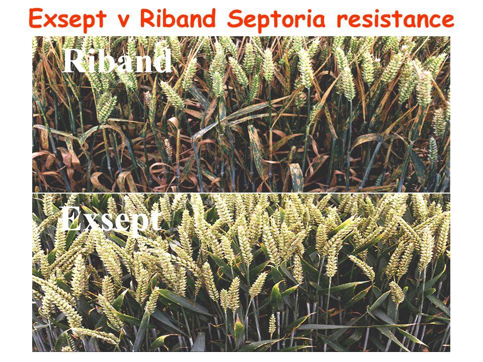 Exsept v Riband Septoria resistance
