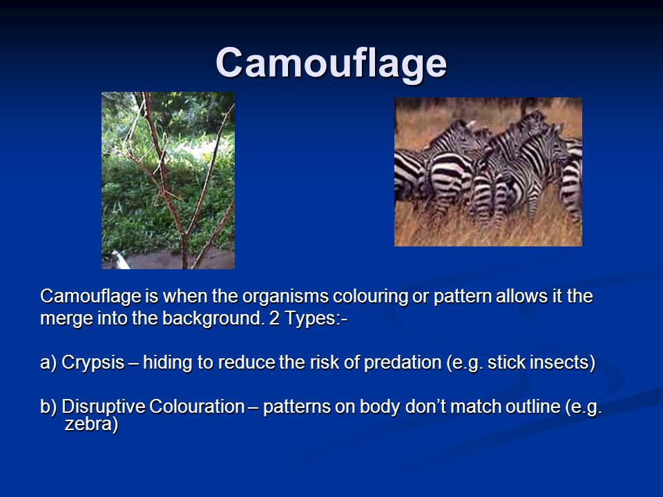 Camouflage Camouflage is when the organisms colouring or pattern allows it the merge into the background. 2 Types:- a) Crypsis – hiding to reduce the