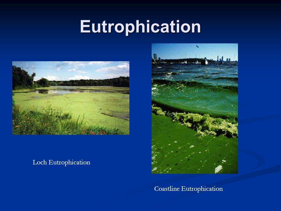 Eutrophication Coastline Eutrophication Loch Eutrophication
