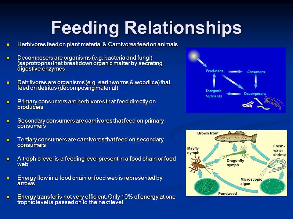 Feeding Relationships Herbivores feed on plant material & Carnivores feed on animals Herbivores feed on plant material & Carnivores feed on animals De