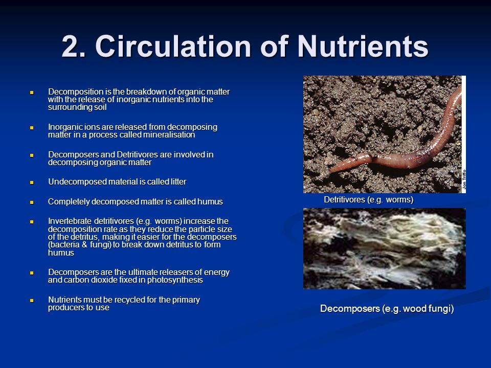 2. Circulation of Nutrients Decomposition is the breakdown of organic matter with the release of inorganic nutrients into the surrounding soil Decompo