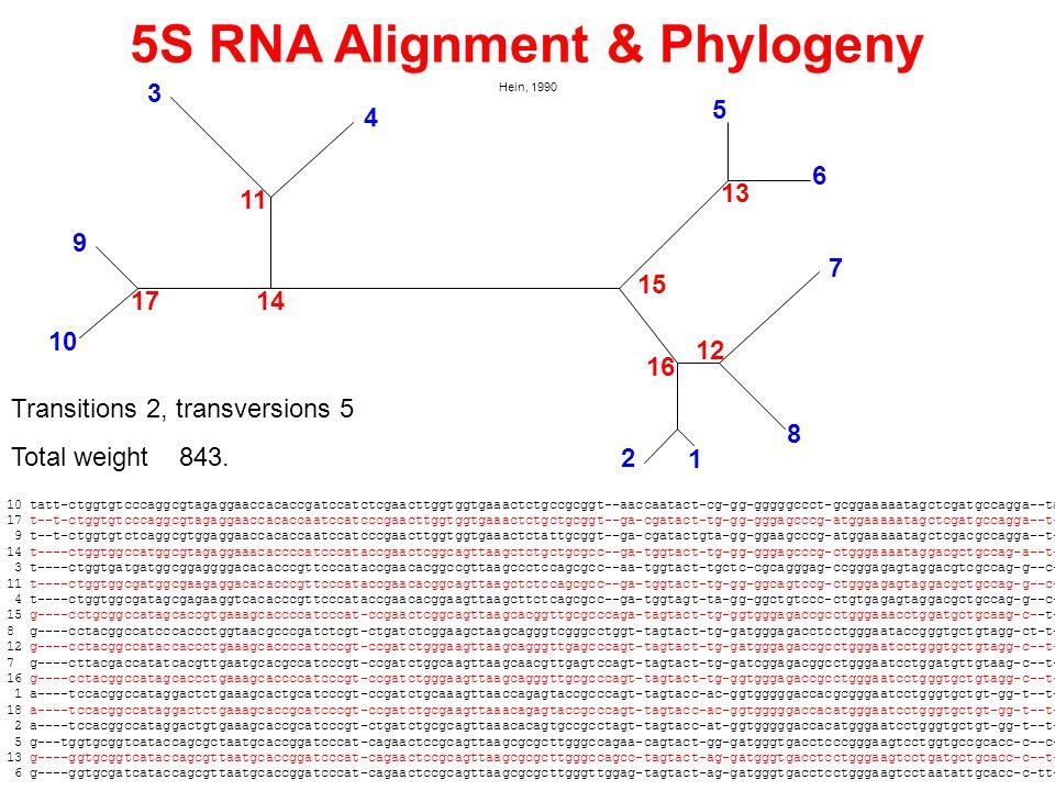 5S RNA Alignment & Phylogeny Hein, 1990 10 tatt-ctggtgtcccaggcgtagaggaaccacaccgatccatctcgaacttggtggtgaaactctgccgcggt--aaccaatact-cg-gg-gggggccct-gcggaaaaatagctcgatgccagga--ta 17 t--t-ctggtgtcccaggcgtagaggaaccacaccaatccatcccgaacttggtggtgaaactctgctgcggt--ga-cgatact-tg-gg-gggagcccg-atggaaaaatagctcgatgccagga--t- 9 t--t-ctggtgtctcaggcgtggaggaaccacaccaatccatcccgaacttggtggtgaaactctattgcggt--ga-cgatactgta-gg-ggaagcccg-atggaaaaatagctcgacgccagga--t- 14 t----ctggtggccatggcgtagaggaaacaccccatcccataccgaactcggcagttaagctctgctgcgcc--ga-tggtact-tg-gg-gggagcccg-ctgggaaaataggacgctgccag-a--t- 3 t----ctggtgatgatggcggaggggacacacccgttcccataccgaacacggccgttaagccctccagcgcc--aa-tggtact-tgctc-cgcagggag-ccgggagagtaggacgtcgccag-g--c- 11 t----ctggtggcgatggcgaagaggacacacccgttcccataccgaacacggcagttaagctctccagcgcc--ga-tggtact-tg-gg-ggcagtccg-ctgggagagtaggacgctgccag-g--c- 4 t----ctggtggcgatagcgagaaggtcacacccgttcccataccgaacacggaagttaagcttctcagcgcc--ga-tggtagt-ta-gg-ggctgtccc-ctgtgagagtaggacgctgccag-g--c- 15 g----cctgcggccatagcaccgtgaaagcaccccatcccat-ccgaactcggcagttaagcacggttgcgcccaga-tagtact-tg-ggtgggagaccgcctgggaaacctggatgctgcaag-c--t- 8 g----cctacggccatcccaccctggtaacgcccgatctcgt-ctgatctcggaagctaagcagggtcgggcctggt-tagtact-tg-gatgggagacctcctgggaataccgggtgctgtagg-ct-t- 12 g----cctacggccataccaccctgaaagcaccccatcccgt-ccgatctgggaagttaagcagggttgagcccagt-tagtact-tg-gatgggagaccgcctgggaatcctgggtgctgtagg-c--t- 7 g----cttacgaccatatcacgttgaatgcacgccatcccgt-ccgatctggcaagttaagcaacgttgagtccagt-tagtact-tg-gatcggagacggcctgggaatcctggatgttgtaag-c--t- 16 g----cctacggccatagcaccctgaaagcaccccatcccgt-ccgatctgggaagttaagcagggttgcgcccagt-tagtact-tg-ggtgggagaccgcctgggaatcctgggtgctgtagg-c--t- 1 a----tccacggccataggactctgaaagcactgcatcccgt-ccgatctgcaaagttaaccagagtaccgcccagt-tagtacc-ac-ggtgggggaccacgcgggaatcctgggtgctgt-gg-t--t- 18 a----tccacggccataggactctgaaagcaccgcatcccgt-ccgatctgcgaagttaaacagagtaccgcccagt-tagtacc-ac-ggtgggggaccacatgggaatcctgggtgctgt-gg-t--t- 2 a----tccacggccataggactgtgaaagcaccgcatcccgt-ctgatctgcgcagttaaacacagtgccgcct