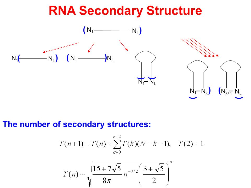 RNA Secondary Structure N1N1 NLNL The number of secondary structures: ( ) N1N1 NLNL ( ) N1N1 NLNL ( ) NLNL N1N1 ) ) NkNk N1N1 ) N k+1 ) NLNL ()