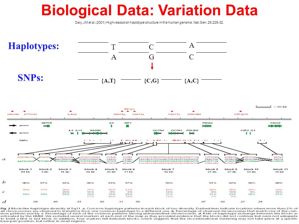 Biological Data: Variation Data Daly,JM et al.(2001) High-resolution haplotype structure in the human genome.