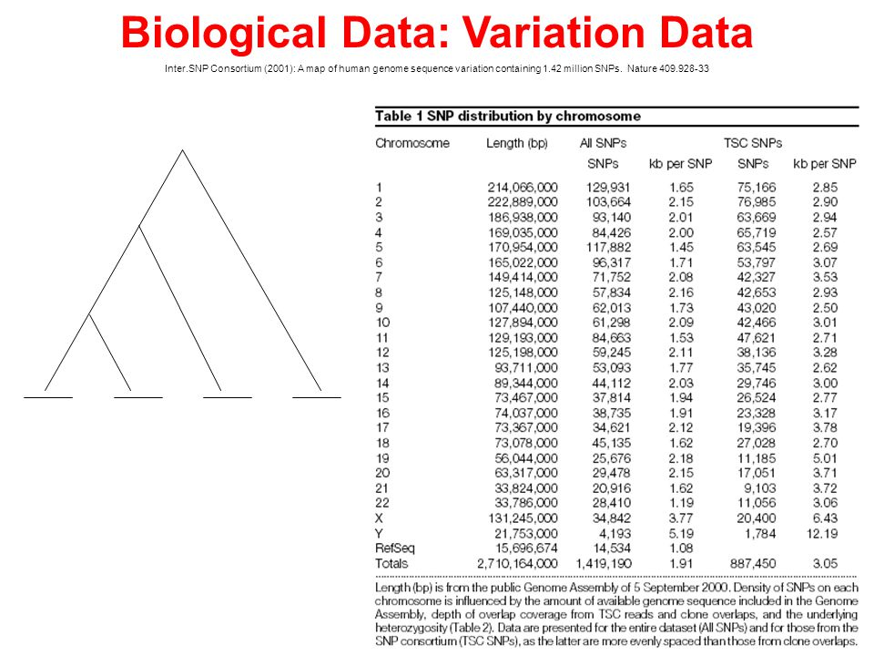 Biological Data: Variation Data Inter.SNP Consortium (2001): A map of human genome sequence variation containing 1.42 million SNPs.
