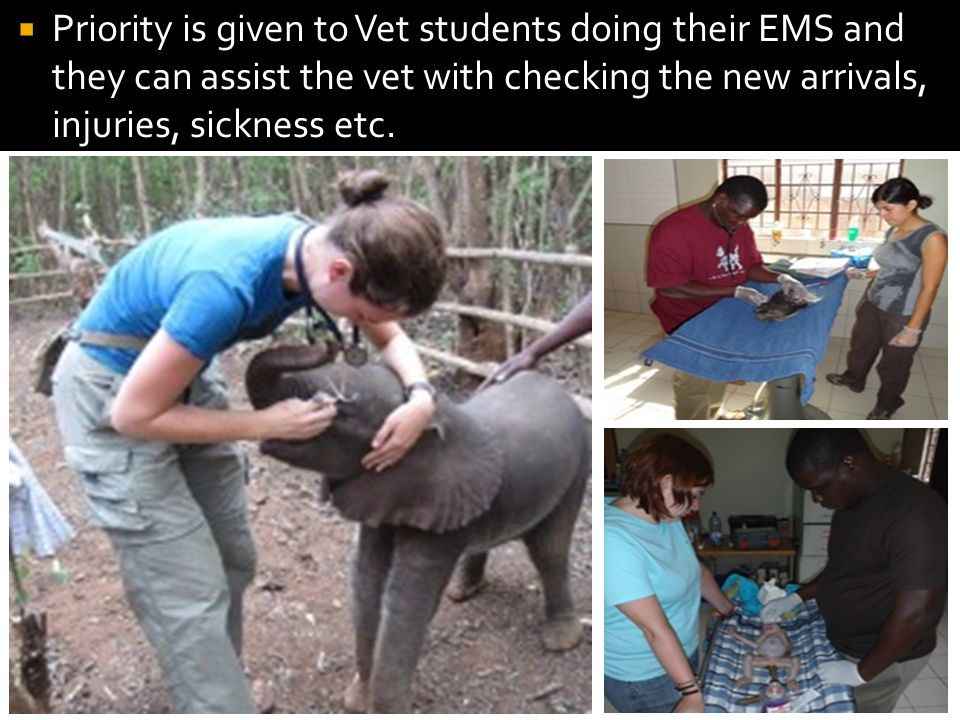  Priority is given to Vet students doing their EMS and they can assist the vet with checking the new arrivals, injuries, sickness etc.