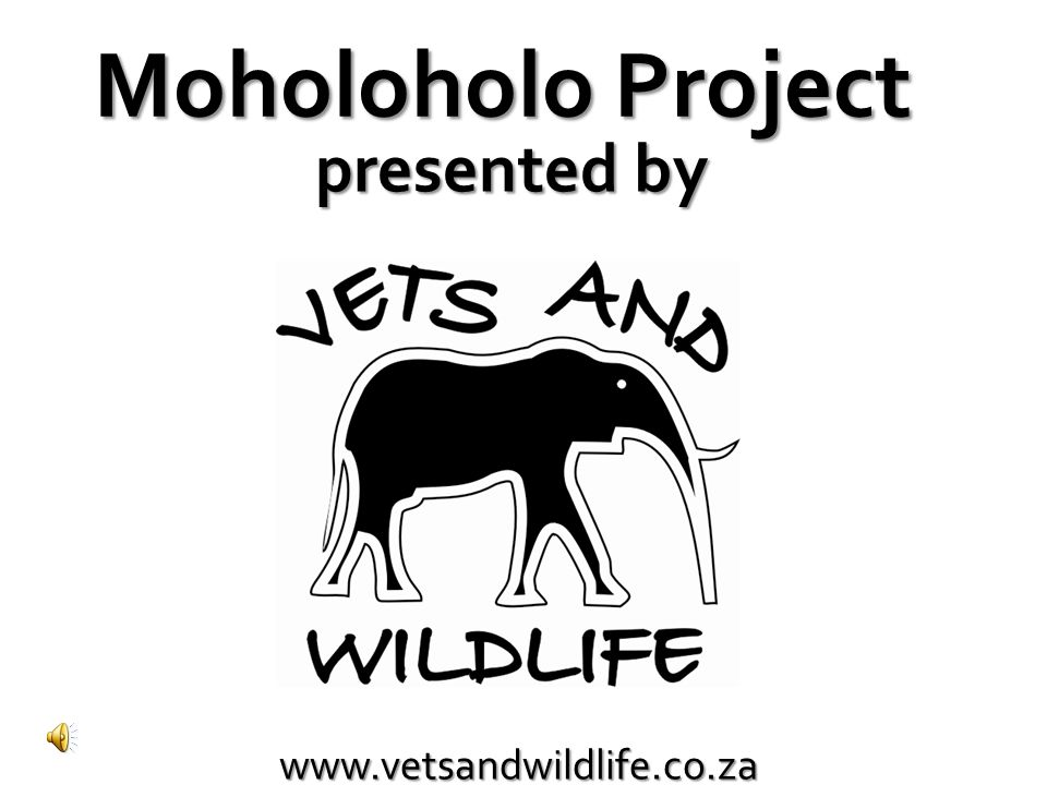 Moholoholo Project presented by