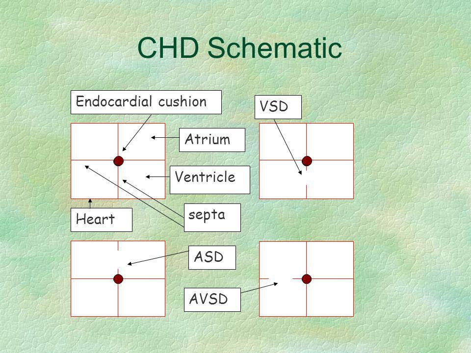CHD Schematic Heart VSD Atrium Ventricle septa ASD AVSD Endocardial cushion