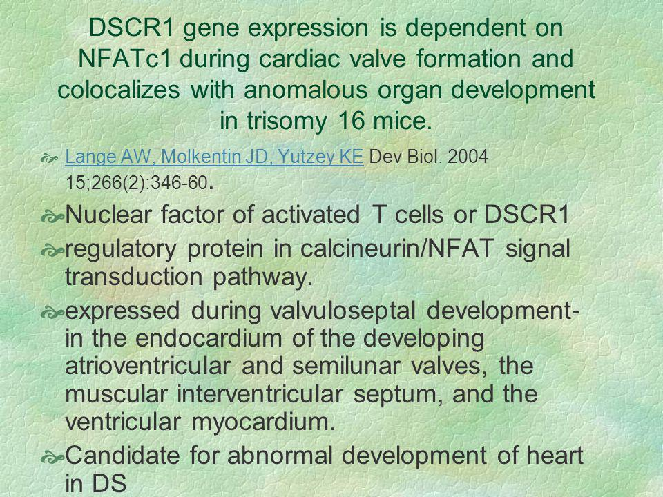 DSCR1 gene expression is dependent on NFATc1 during cardiac valve formation and colocalizes with anomalous organ development in trisomy 16 mice.