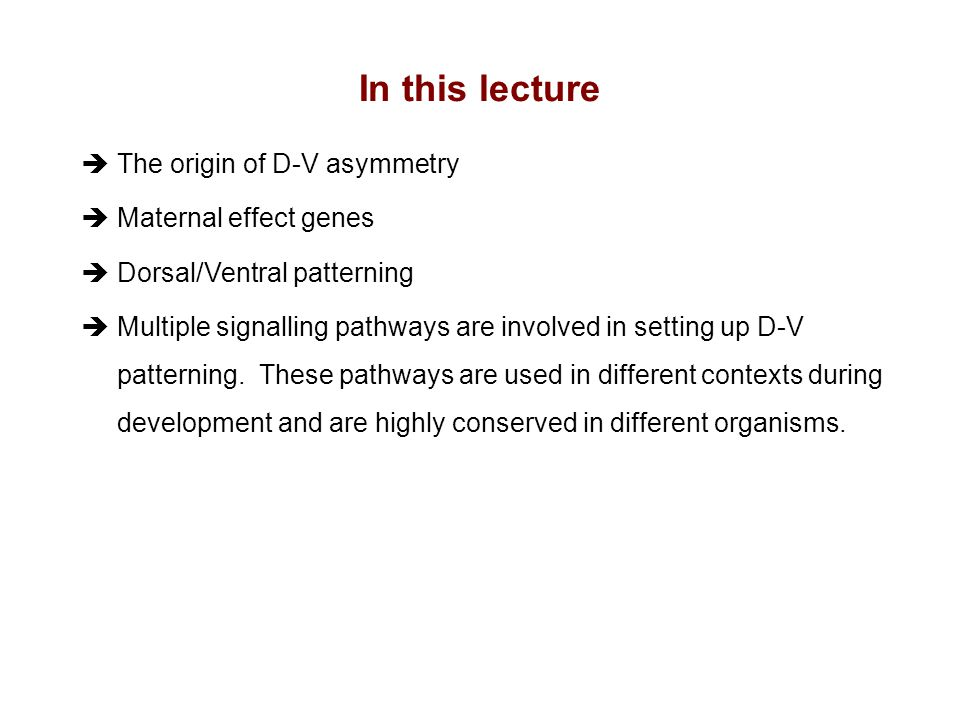 èThe origin of D-V asymmetry èMaternal effect genes èDorsal/Ventral patterning èMultiple signalling pathways are involved in setting up D-V patterning.