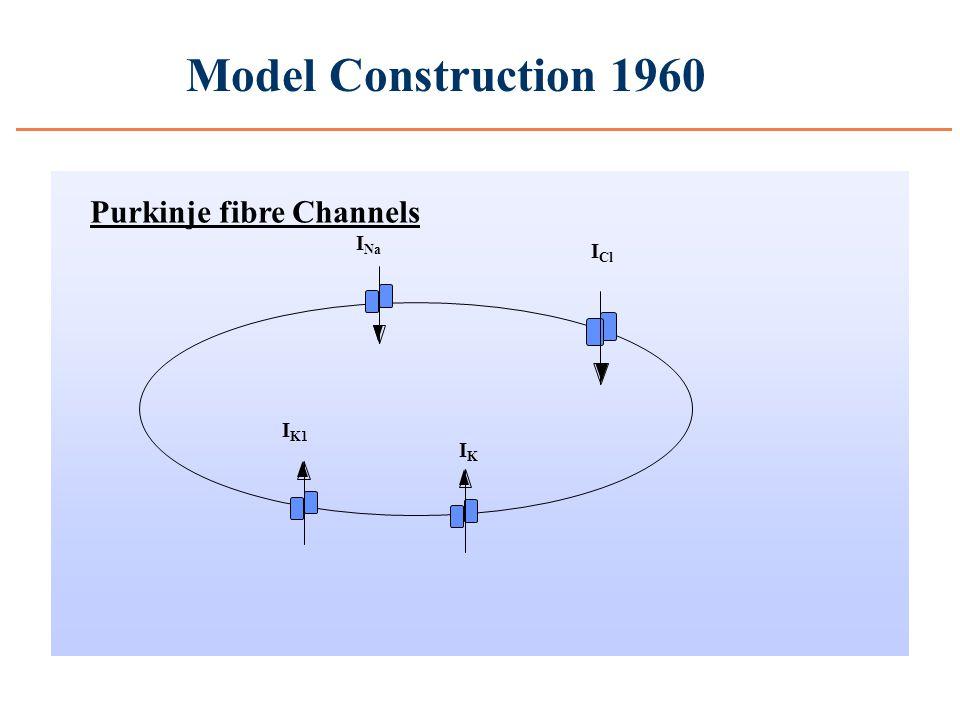 Model Construction 1960 I Na I K1 IKIK I Cl Purkinje fibre Channels