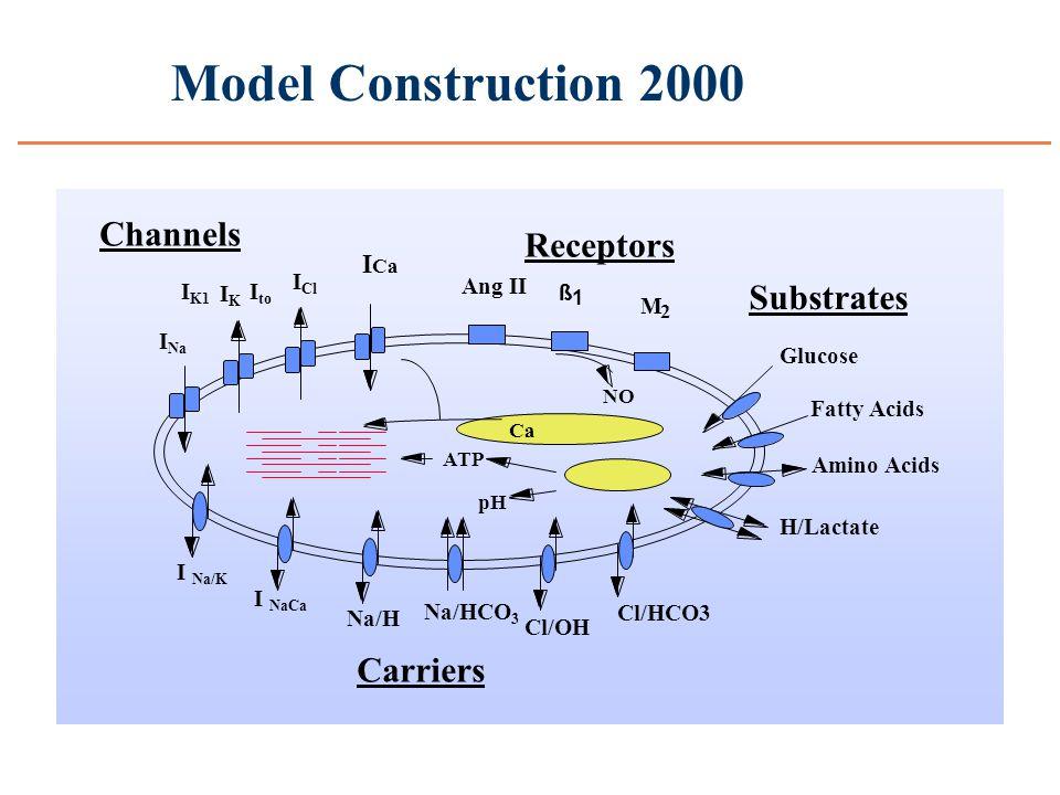Model Construction 2000 I Na I Cl I K1 IKIK I to I Ca Channels I Na/K I NaCa Na/H Na/HCO 3 Cl/OH Cl/HCO3 Carriers Ca pH ATP Glucose Fatty Acids Amino