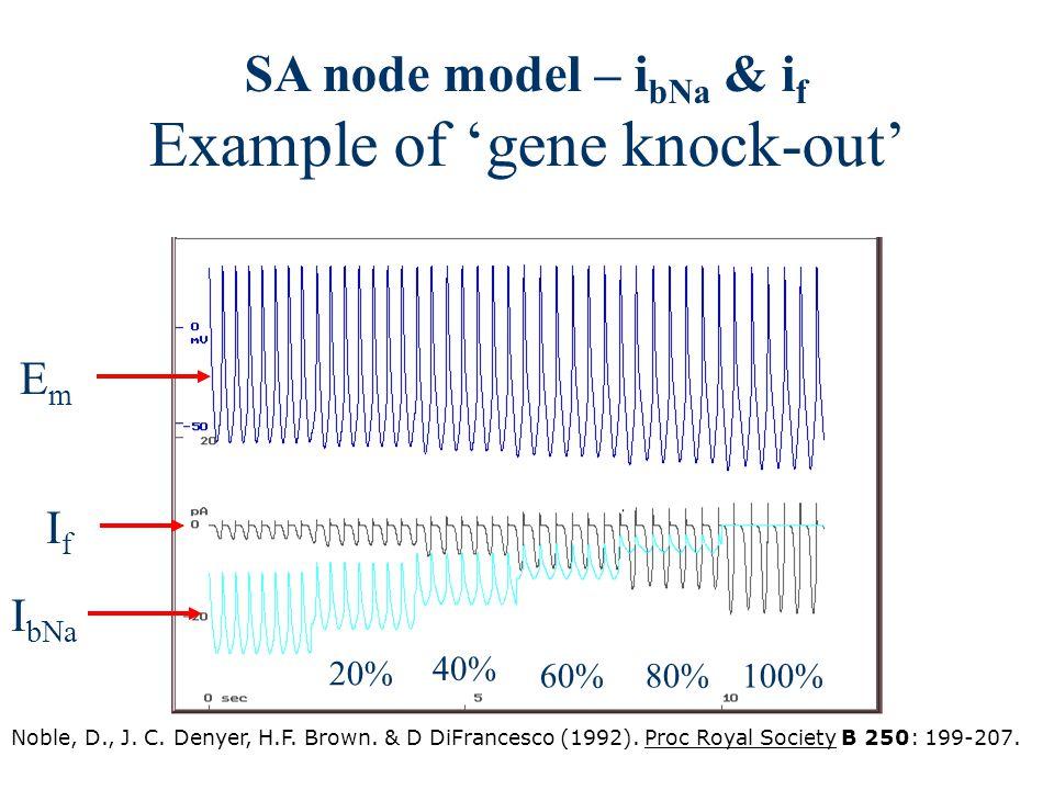 SA node model – i bNa & i f Example of 'gene knock-out' EmEm IfIf I bNa 20% 40% 60%80%100% Noble, D., J. C. Denyer, H.F. Brown. & D DiFrancesco (1992)