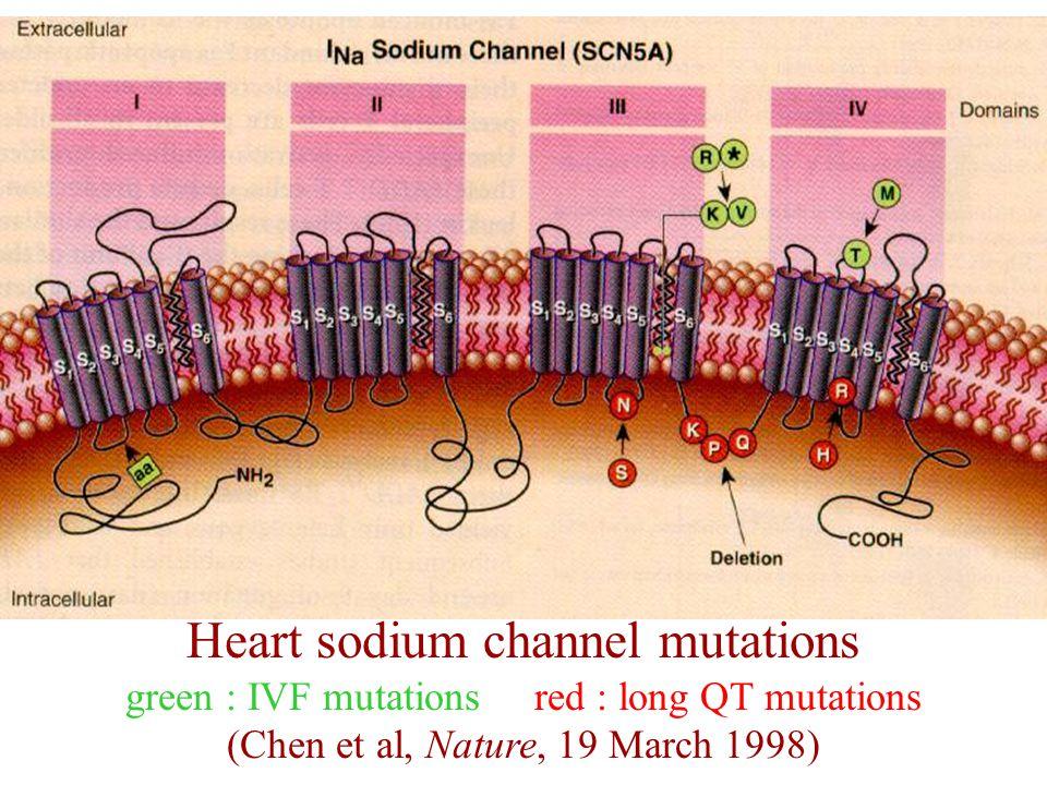 Heart sodium channel mutations green : IVF mutations red : long QT mutations (Chen et al, Nature, 19 March 1998)