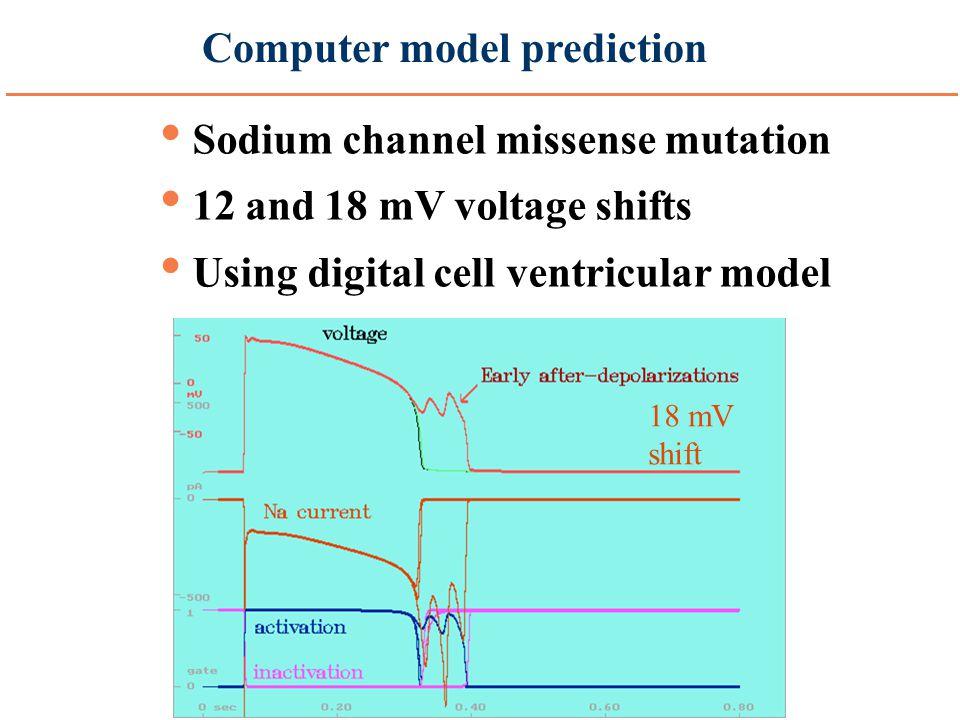 Computer model prediction Sodium channel missense mutation 12 and 18 mV voltage shifts Using digital cell ventricular model 12 mV shift 18 mV shift