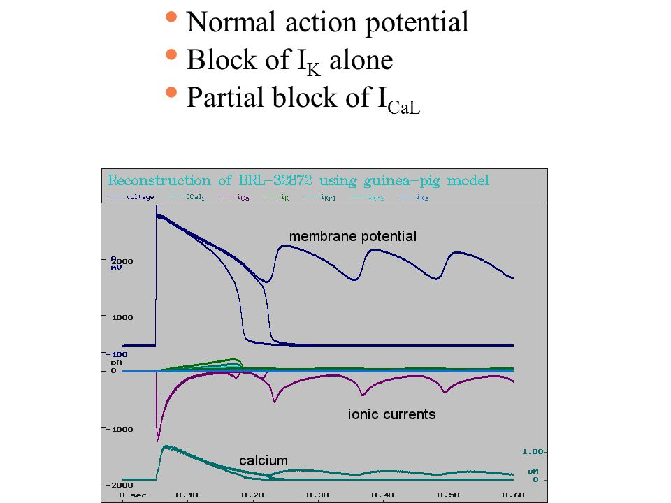 Normal action potential Block of I K alone Partial block of I CaL