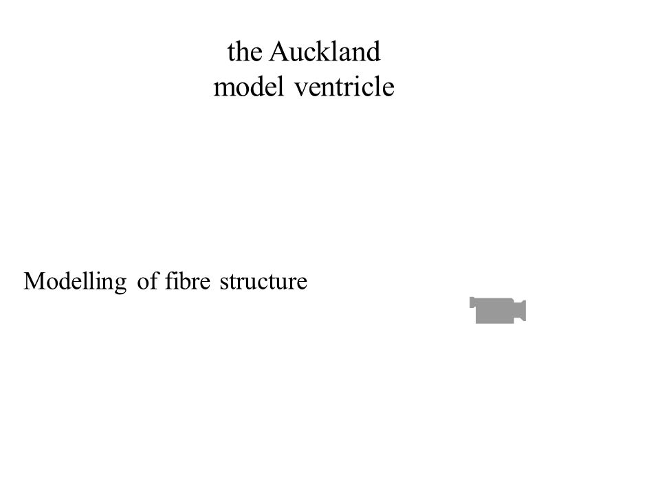 the Auckland model ventricle Modelling of fibre structure
