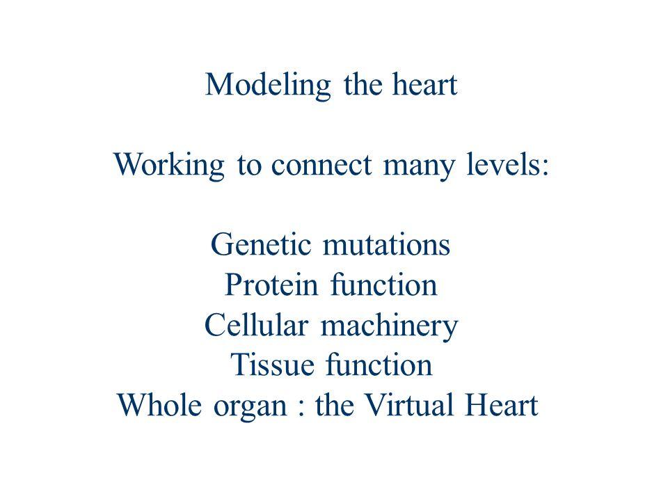 Modeling the heart Cell models