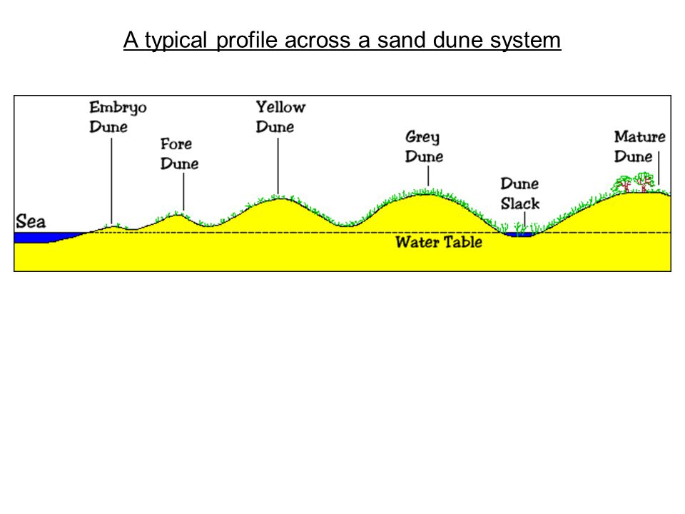 A typical profile across a sand dune system