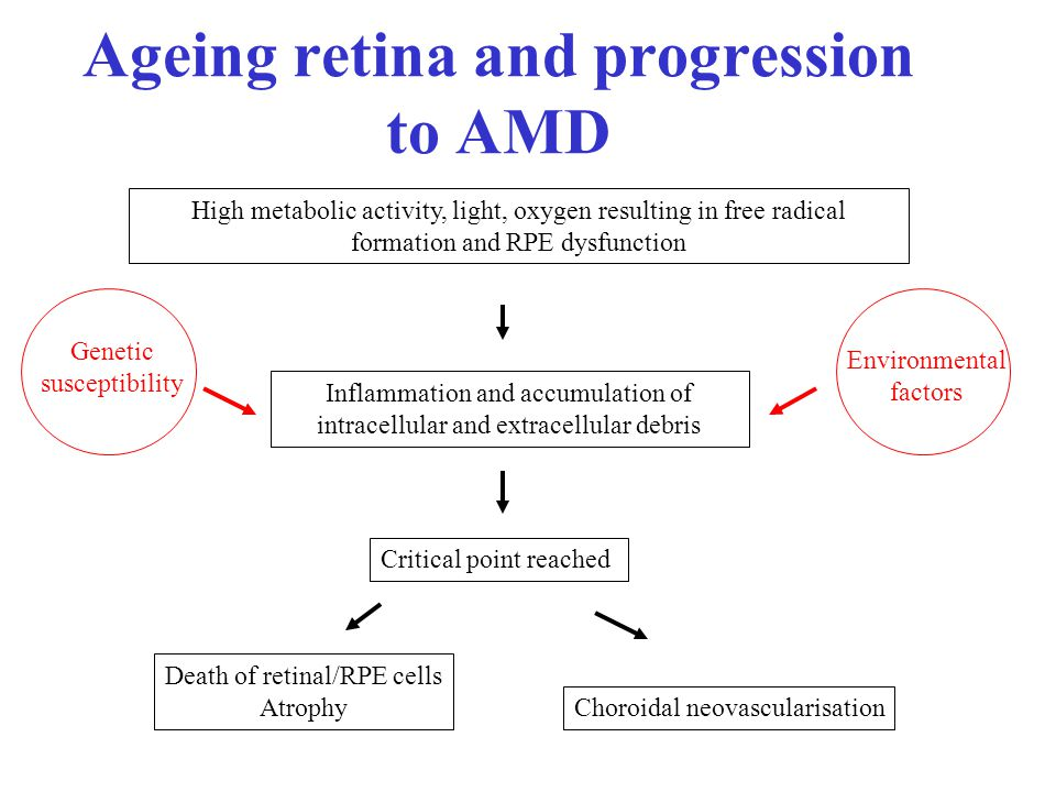 Ageing retina and progression to AMD High metabolic activity, light, oxygen resulting in free radical formation and RPE dysfunction Inflammation and accumulation of intracellular and extracellular debris Death of retinal/RPE cells Atrophy Choroidal neovascularisation Critical point reached Genetic susceptibility Environmental factors
