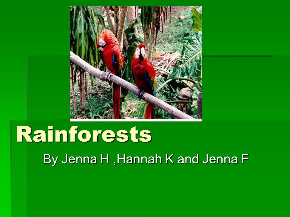 Rainforests By Jenna H,Hannah K and Jenna F