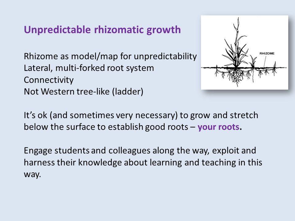Unpredictable rhizomatic growth Rhizome as model/map for unpredictability Lateral, multi-forked root system Connectivity Not Western tree-like (ladder) It's ok (and sometimes very necessary) to grow and stretch below the surface to establish good roots – your roots.