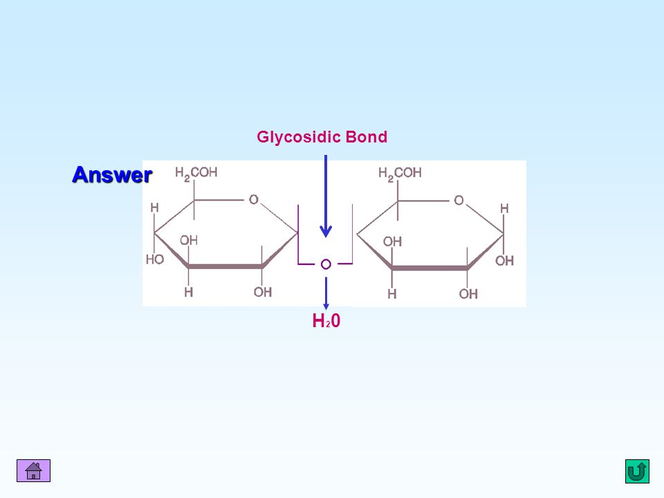 Q2 Glycosidic Bond Answer H20H20