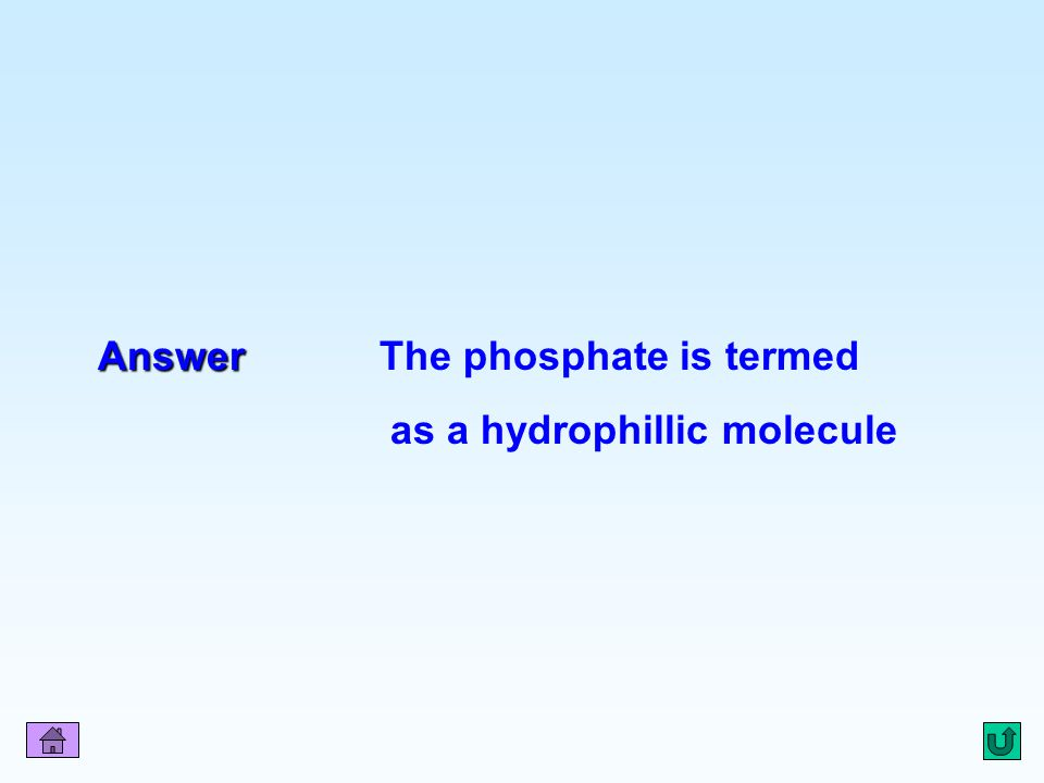 Q12 Answer Answer The phosphate is termed as a hydrophillic molecule