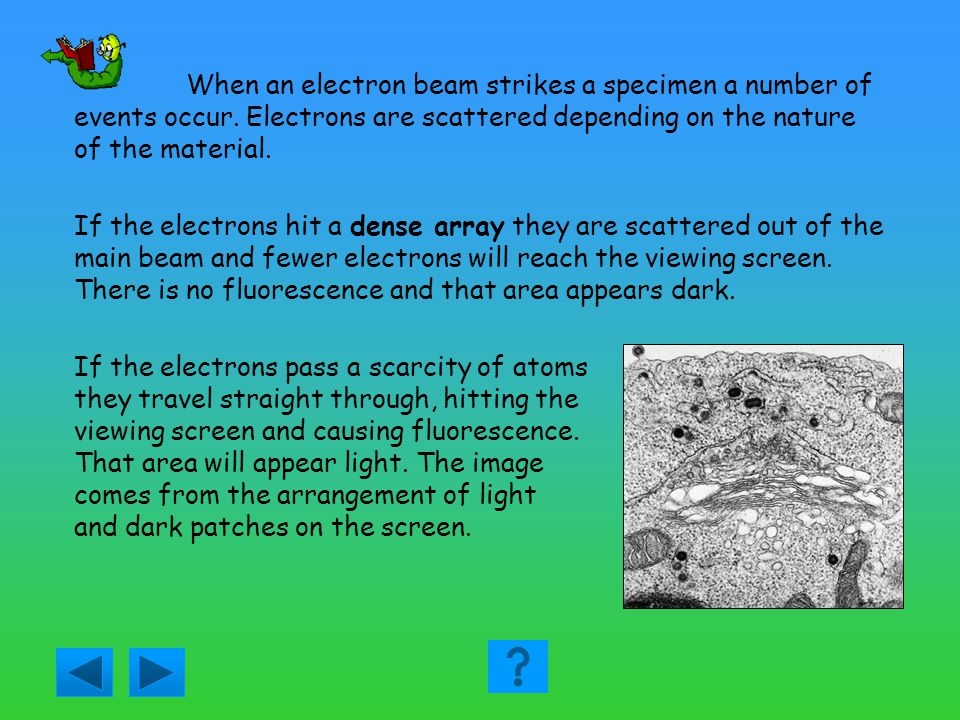 Answer question 1 Answer: A this is the same as the value quoted in the text i.e. 0.2mm