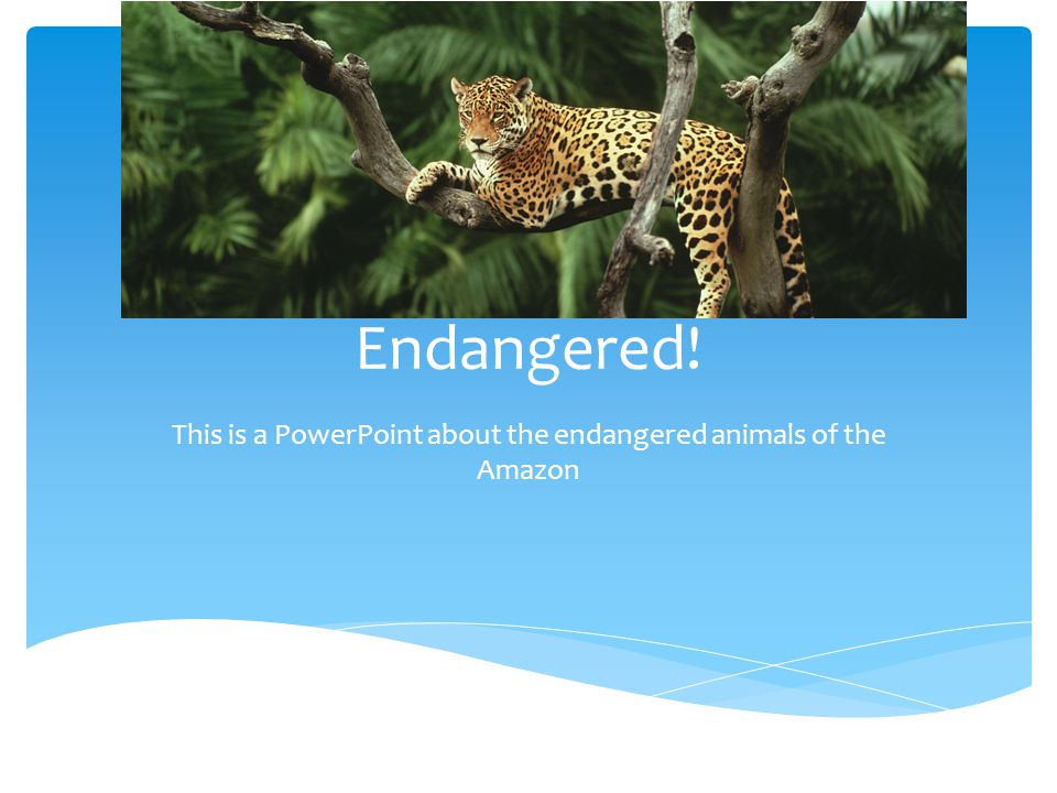 Endangered! This is a PowerPoint about the endangered animals of the Amazon