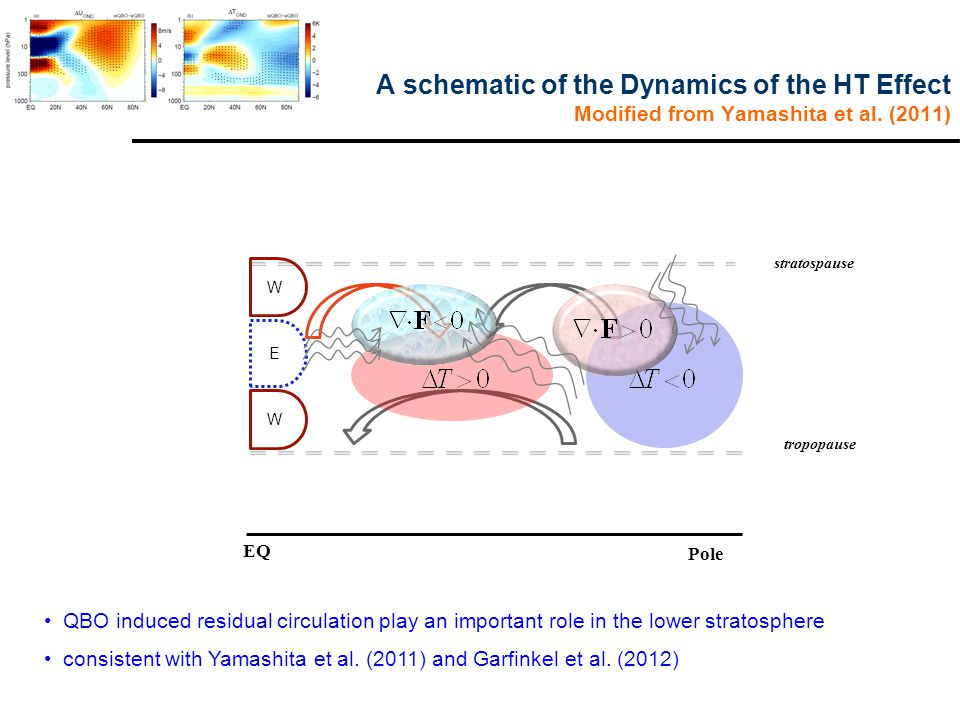 A schematic of the Dynamics of the HT Effect Modified from Yamashita et al.