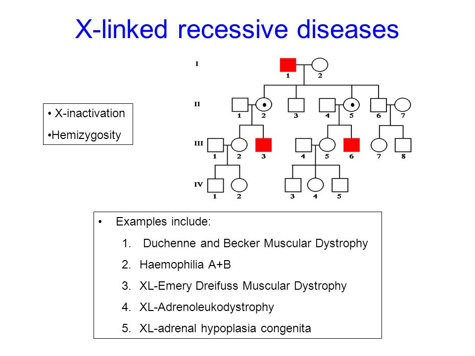X-linked recessive diseases Examples include: 1. Duchenne and Becker Muscular Dystrophy 2.Haemophilia A+B 3.XL-Emery Dreifuss Muscular Dystrophy 4.XL-