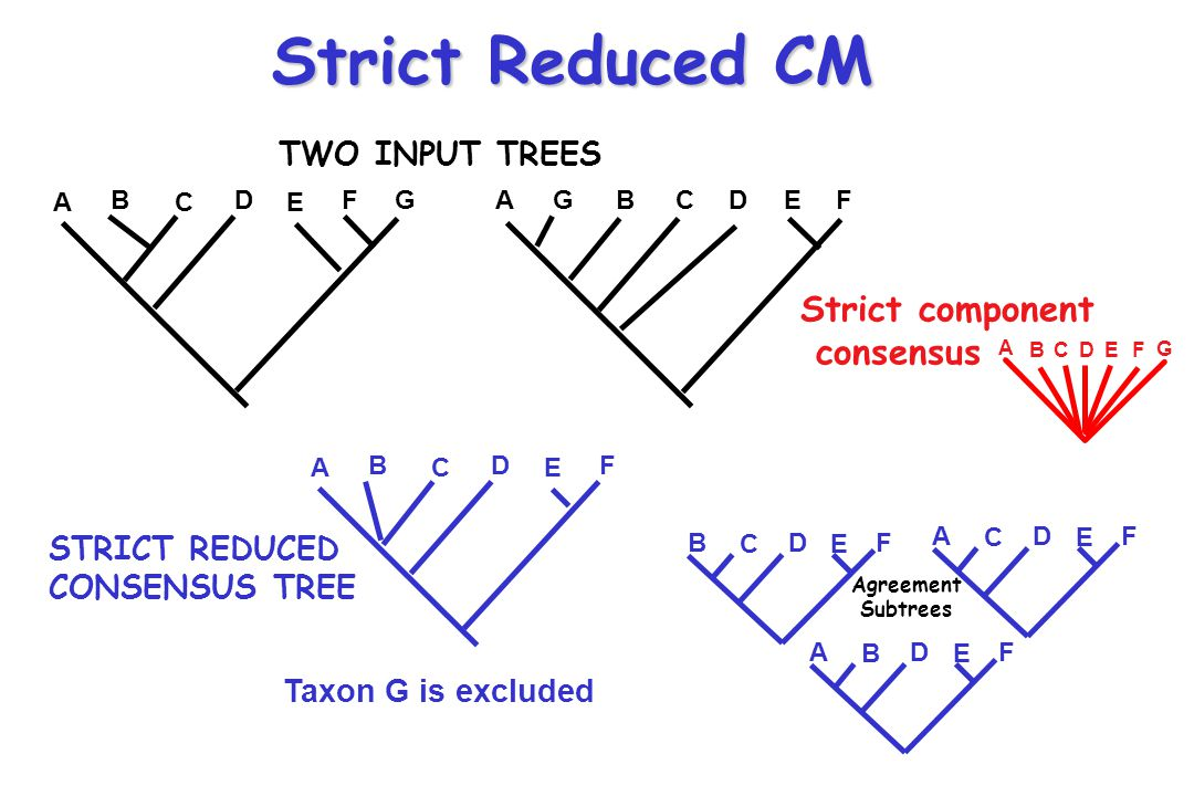 Strict Reduced CM A B C D E FG TWO INPUT TREES STRICT REDUCED CONSENSUS TREE Taxon G is excluded AGBCDEF A B C D E F A B C DE F G Strict component consensus B C D E F A C D E F A B D E F Agreement Subtrees