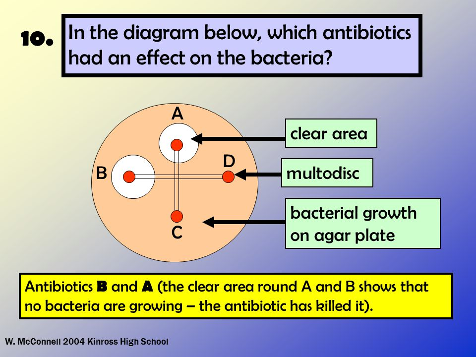 W. McConnell 2004 Kinross High School 10. In the diagram below, which antibiotics had an effect on the bacteria? Antibiotics B and A (the clear area r