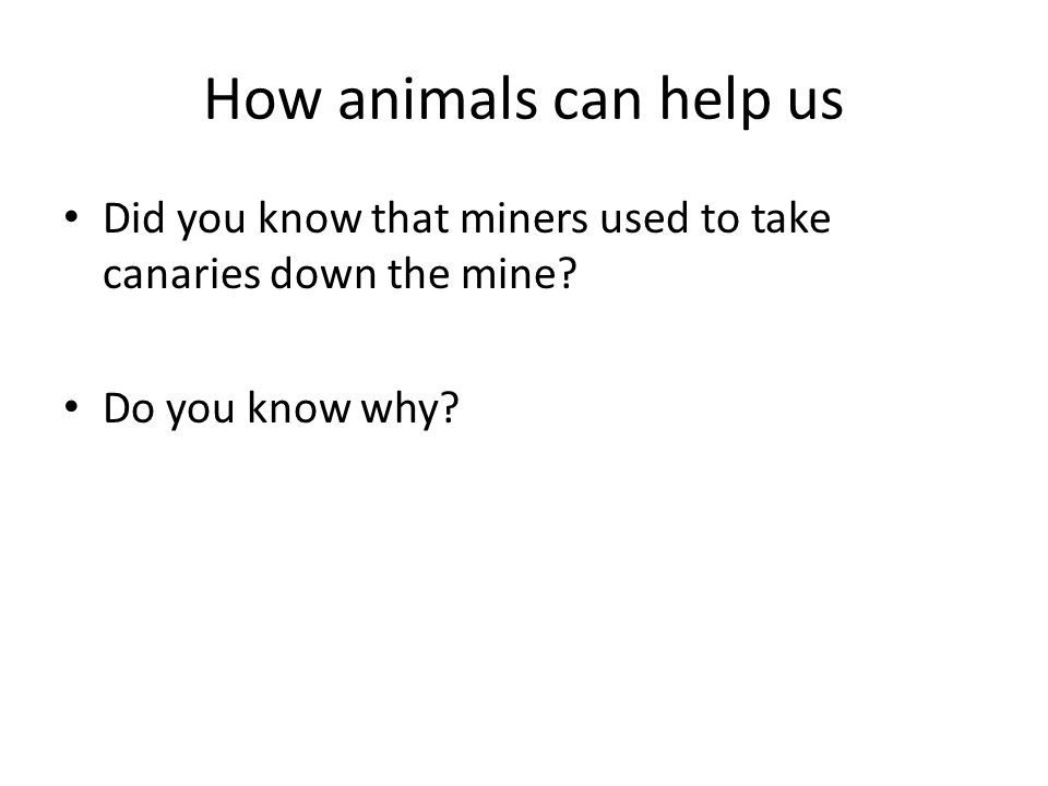 How animals can help us Did you know that miners used to take canaries down the mine.