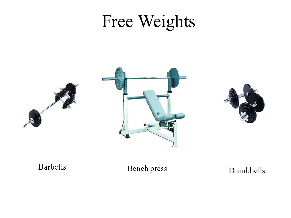 Free Weights Bicep/tricep extensions Bench press Dumbbells Barbells
