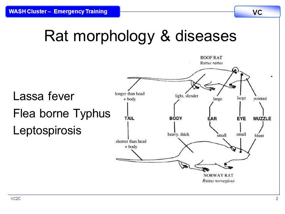 VC2C VC WASH Cluster – Emergency Training 2 Rat morphology & diseases Lassa fever Flea borne Typhus Leptospirosis