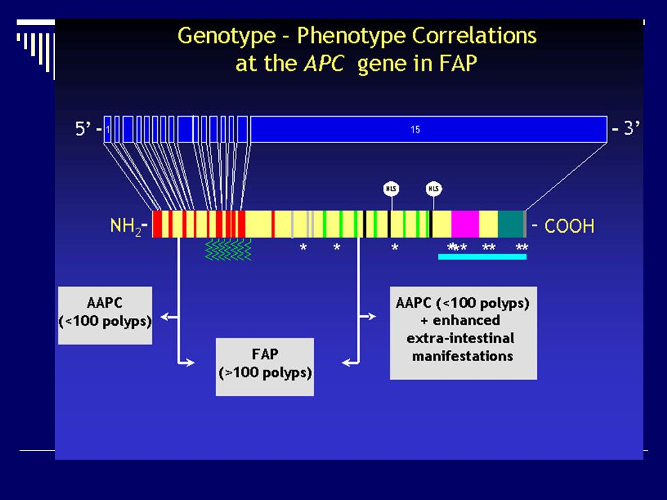 FAP- summary  Clinically identifiable condition  Caused by mutations in one gene  Effect of mutations is clear  High pick up rate for mutations  Effective clinical screening test for those at high risk  Some evidence of genotype-phenotype correlations though of little value clinically