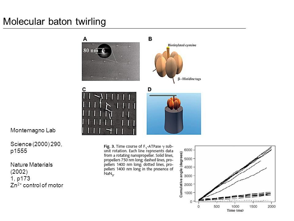 Montemagno Lab Science (2000) 290, p1555 Nature Materials (2002) 1, p173 Zn 2+ control of motor Molecular baton twirling