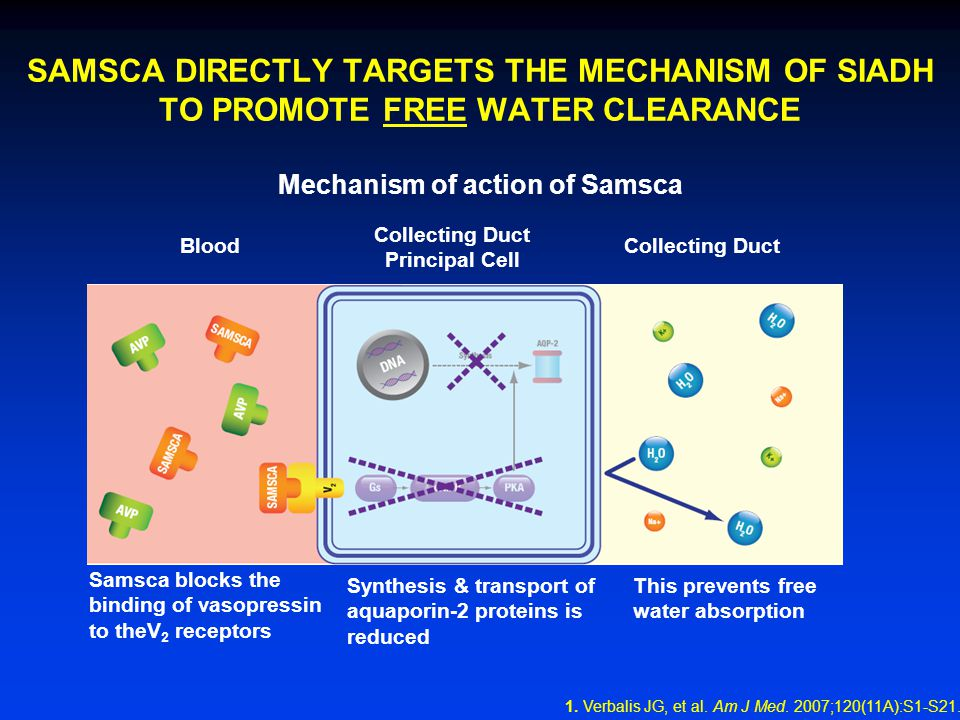 SAMSCA DIRECTLY TARGETS THE MECHANISM OF SIADH TO PROMOTE FREE WATER CLEARANCE Mechanism of action of Samsca Blood Collecting Duct Principal Cell Collecting Duct Samsca blocks the binding of vasopressin to theV 2 receptors Synthesis & transport of aquaporin-2 proteins is reduced This prevents free water absorption 1.