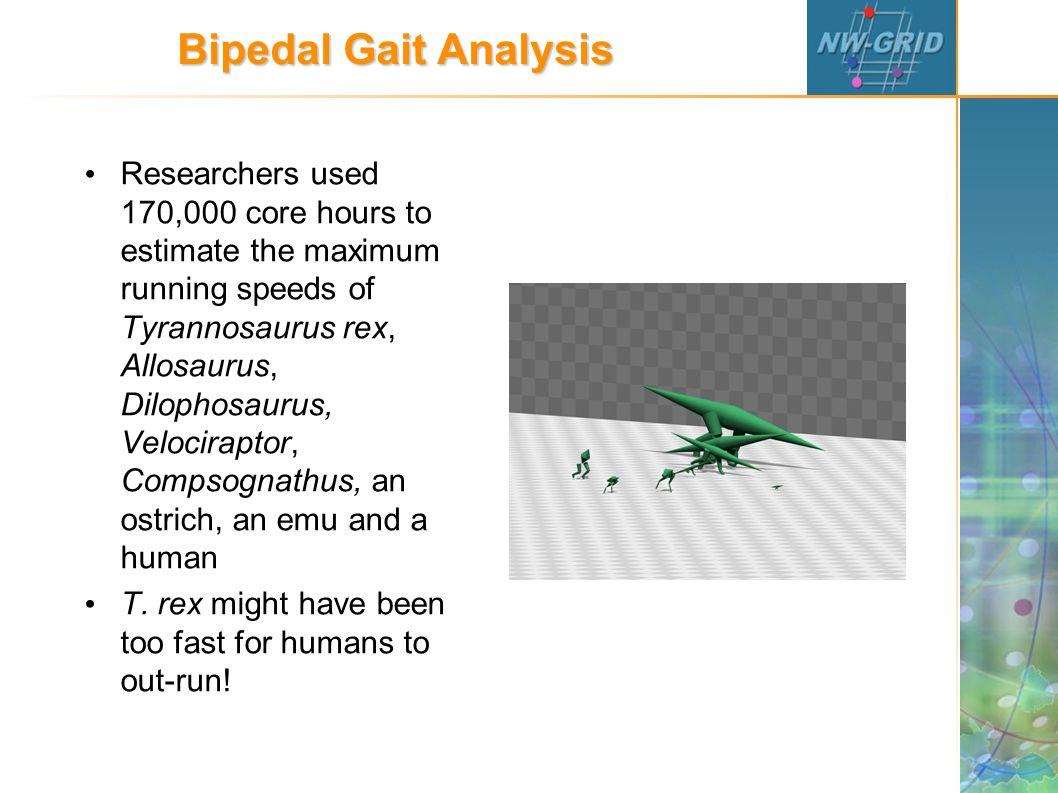 Bipedal Gait Analysis Researchers used 170,000 core hours to estimate the maximum running speeds of Tyrannosaurus rex, Allosaurus, Dilophosaurus, Velociraptor, Compsognathus, an ostrich, an emu and a human T.