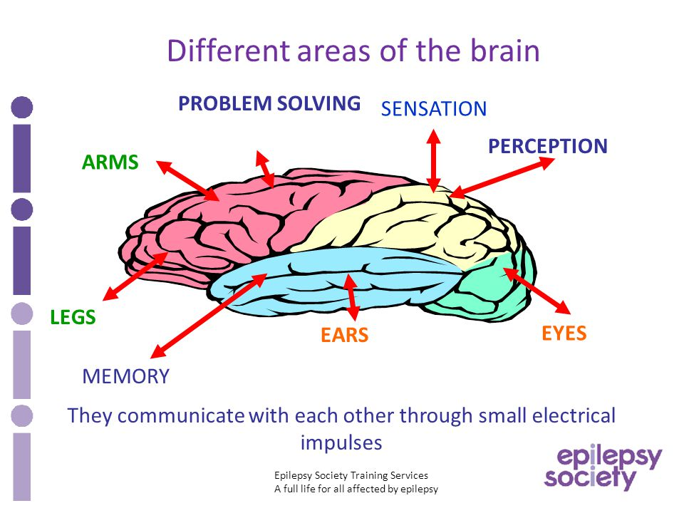 Epilepsy Society Training Services A full life for all affected by epilepsy Different areas of the brain They communicate with each other through small electrical impulses PROBLEM SOLVING PERCEPTION EYES MEMORY EARS SENSATION LEGS ARMS