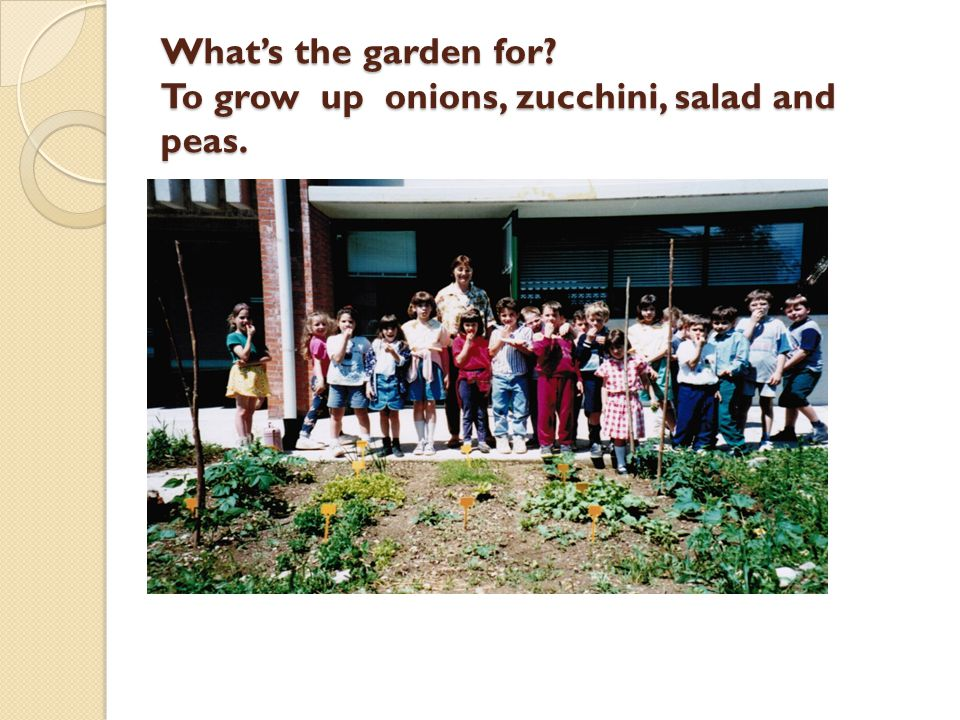 What's the garden for? To grow up onions, zucchini, salad and peas.