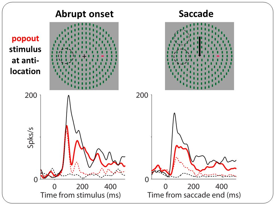 Abrupt onset Saccade + popout stimulus at anti- location