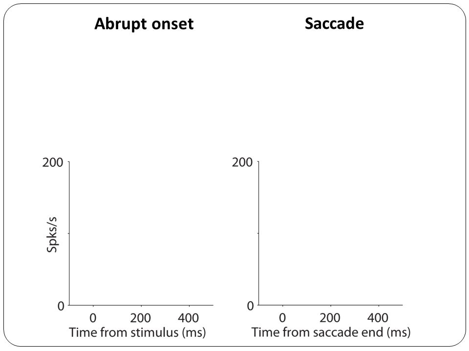 Abrupt onset Saccade