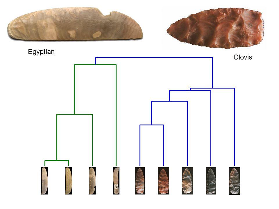 Clovis Egyptian