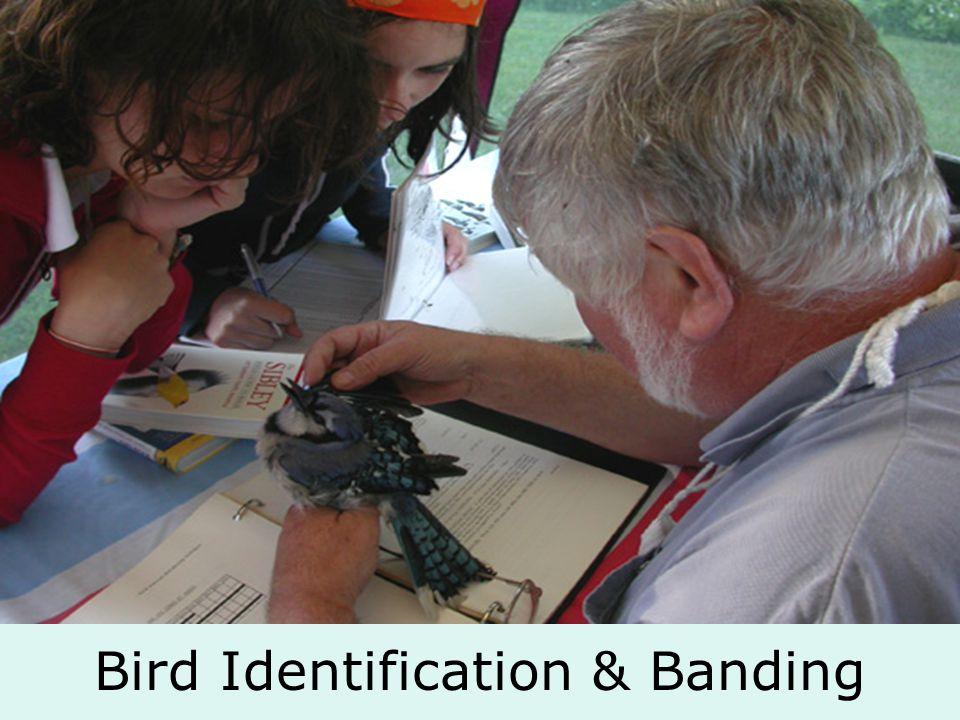 Bird Identification & Banding