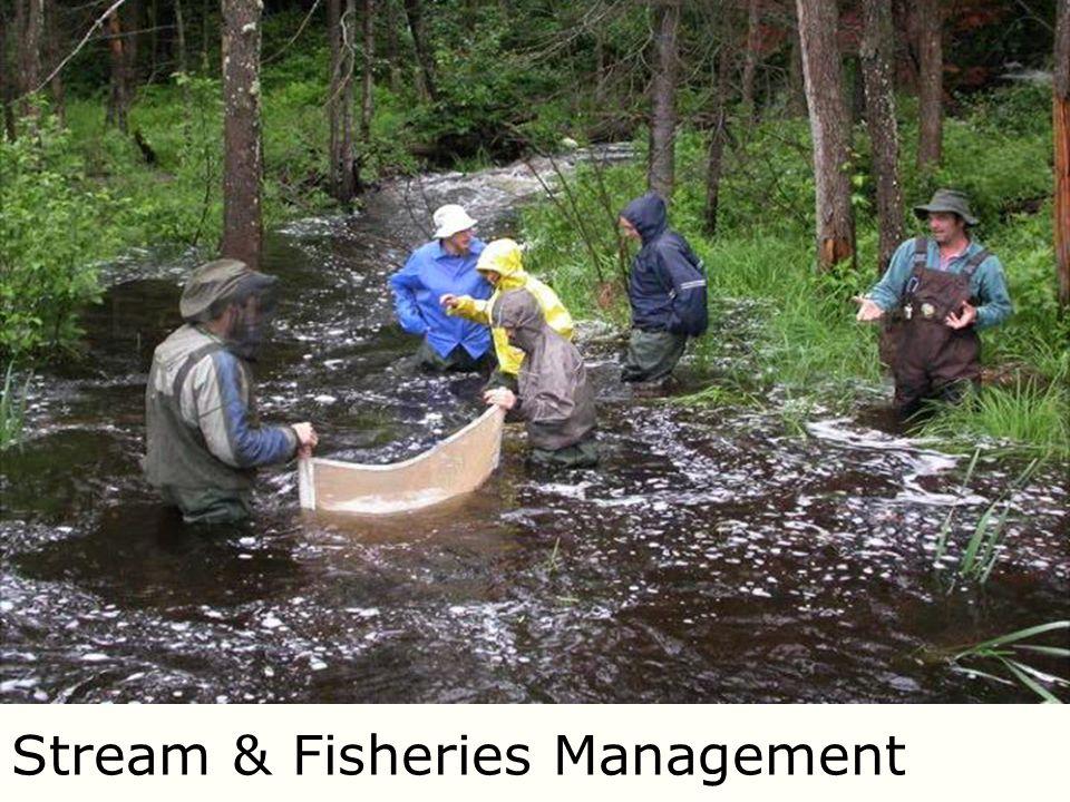Stream & Fisheries Management
